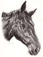 Horse Portrait Drawings